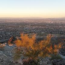 Dobson Lookout Phoenix